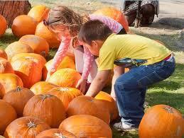 bsc pumpkin fest