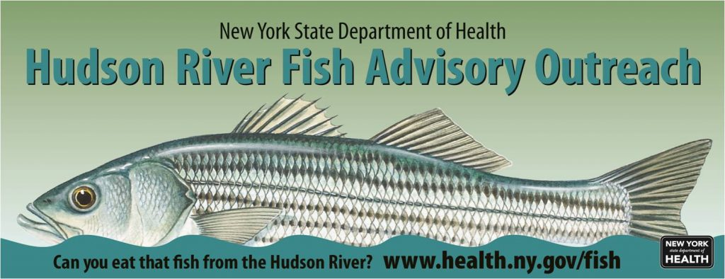 Eating hudson river fish hudson river sloop clearwater for York river fishing report